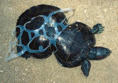 Plastikler Çevreye Zarar Verir
