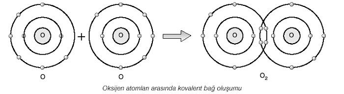 Kovalent Bağ ile O2 Oluşumu