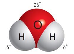 Su Molekülünün Kalıcı Dipolleri