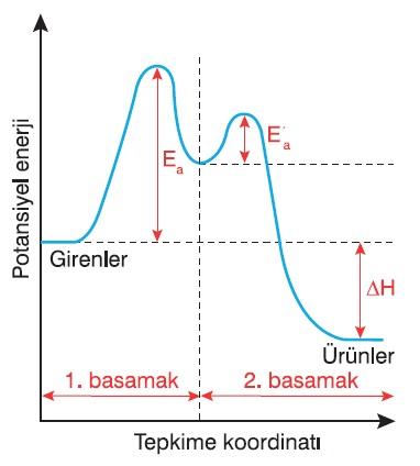 Basamaklı Tepkimelerin Potansiyel Enerji-T.K. Grafiği